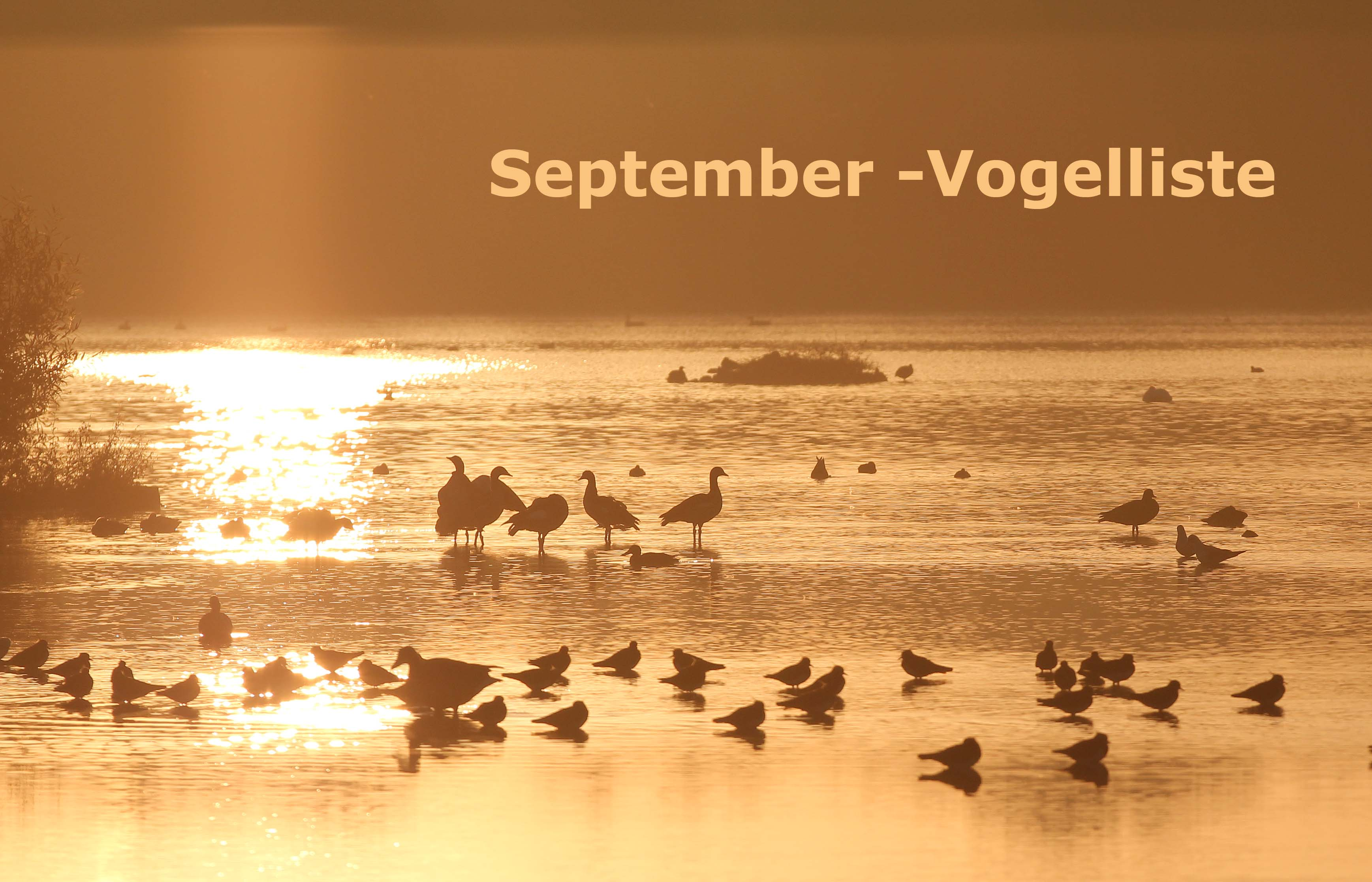september_vogelliste